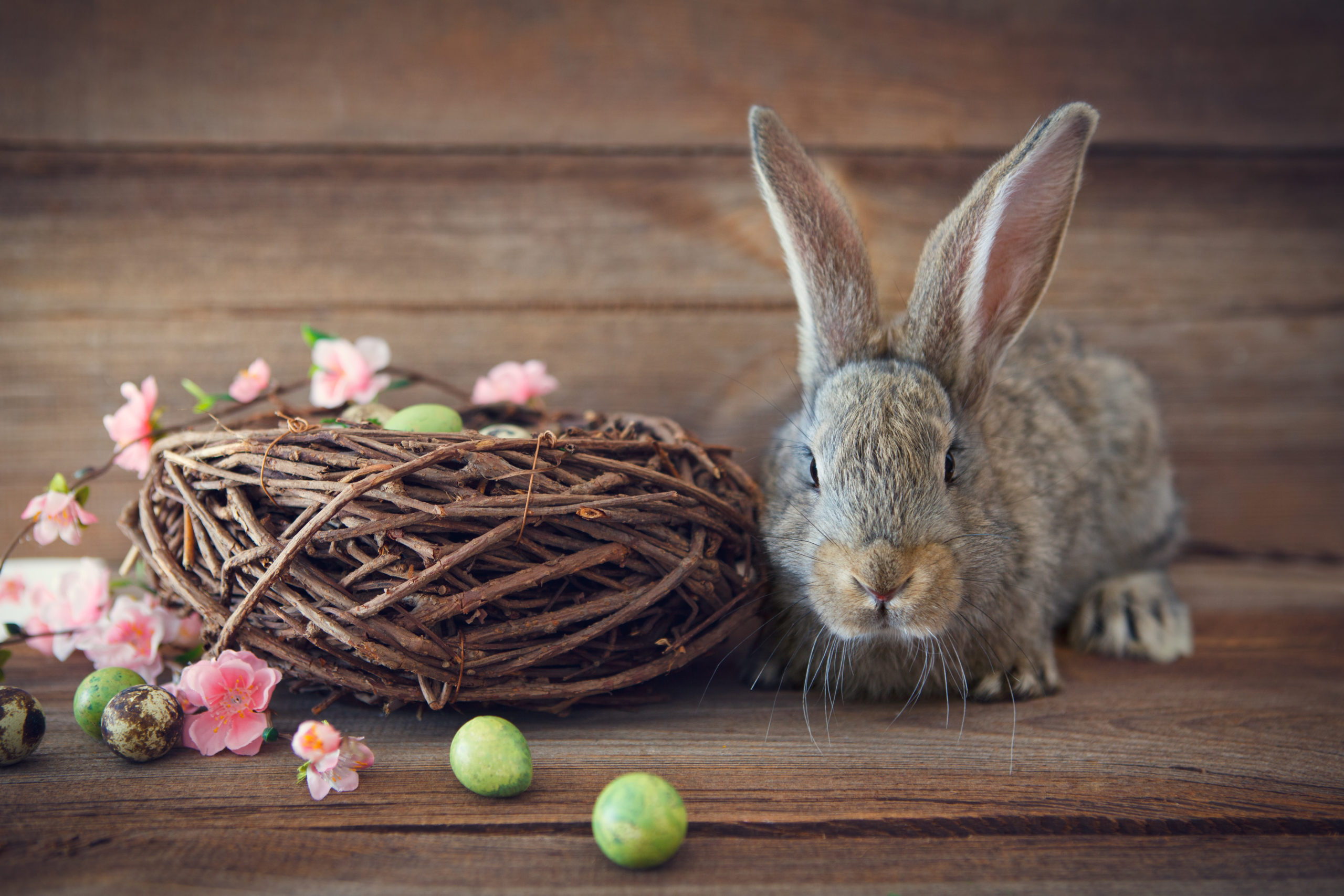 Easter: A Celebration of Vulnerability